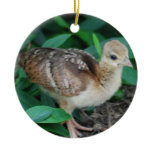 Baby Peacock Chick Ornament