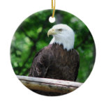 Bald Eagle Bird Ornament