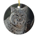 Creeping Bobcat Ceramic Ornament