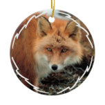 Fox Species Ornament
