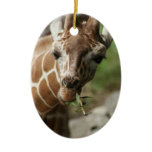 Giraffe Snack Ornament