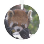 Prowling Red Panda Ornament