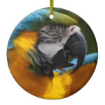 Ruffled Blue and Gold Macaw Ceramic Ornament