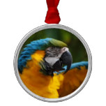 Ruffled Blue and Gold Macaw Metal Ornament