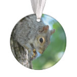 Squirrel Hanging in A Tree Ornament