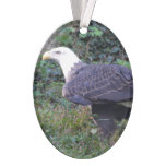 Standing American Bald Eagle Ornament