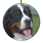 Sweet Bernese Ornament